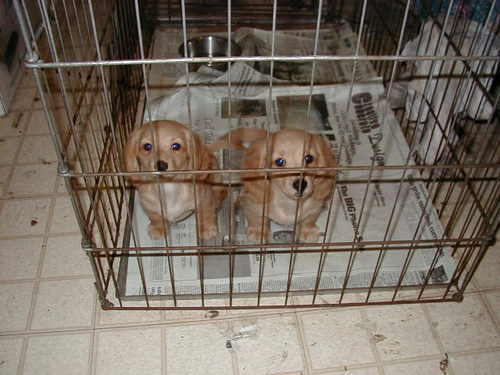 Molly_as_a_puppy_on_the_left
